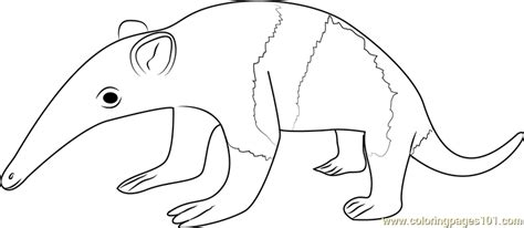 Anteater Coloring Page by Ant Eater Colouring Pages Sketch Coloring Page