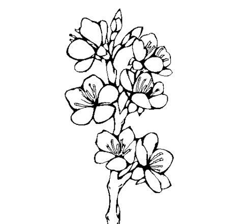 fiori di pesco disegno disegno fiori di cagna colorato da utente non