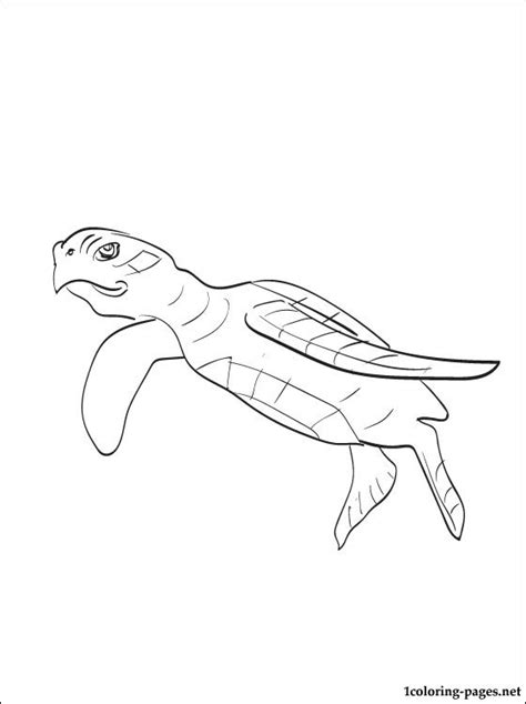 green sea turtle coloring page coloring pages