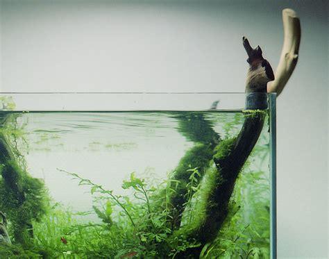 piante acquatiche in vaso piante acquatiche in vaso di vetro ecco come fare un