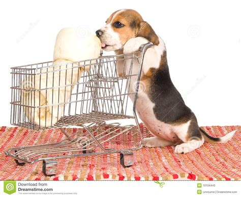 puppy shopping beagle puppy with shopping trolley stock image image of fabric trolley 10104443