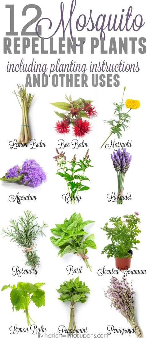top 28 all bug repellent for plants natural mosquito