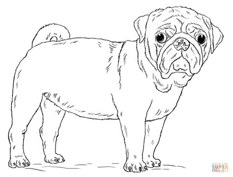 Cute Pug Dog Coloring Page Free Printable Coloring Pages Pug Coloring Pages