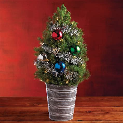 classic mini christmas tree mini live christmas trees