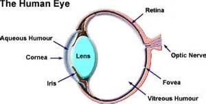 what part of the eye is colored the eye has the following important elements