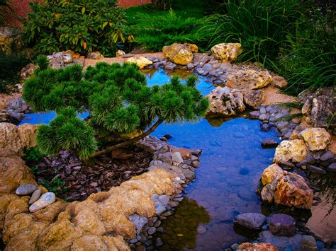 backyard w 35 backyard pond images great landscaping ideas