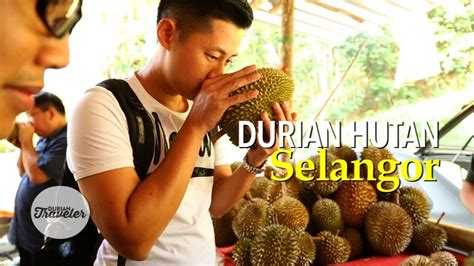 durian hutan selangor trip malaysia  youtube