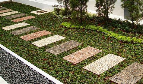 Jual Bibit Rumput Gandum Di Bandung jual rumput gajah mini bandung tukang taman di bandung
