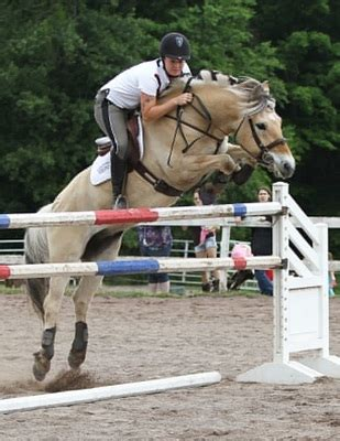 fjord horse jumping fjord horse jumping pictures to pin on pinterest pinsdaddy