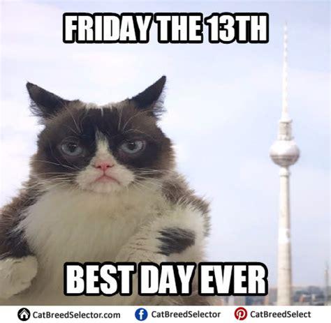 Best Of Grumpy Cat Meme - grumpy cat memes cat breed selector