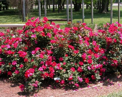 groundcovers that give lift to your landscape landscaping ideas and hardscape design hgtv