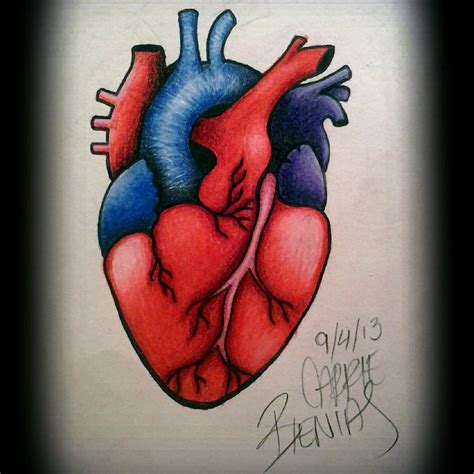 human heart tattoo human drawings www imgkid the image