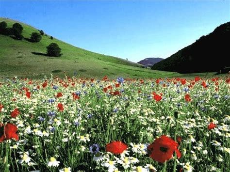 fiori di bach efficacia fiori di bach per riequilibrare il corpo la mente e le
