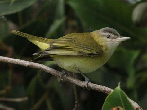 september 2012 san diego birding