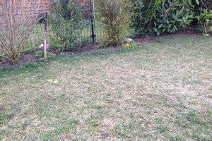 Garten Mit Sichtschutz 1478 by Abgenutzter Matter Rasen Rasenpflege Im Fr 252 Hling