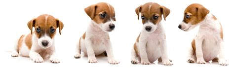 how to your puppy to sit sit stay and follow a guide for your puppy pet universe
