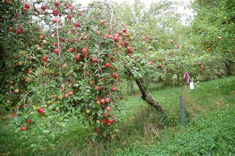 fruit tree ordering meeting 1 - Ordering Fruit Trees