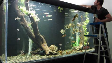 Home Design Big Fish Aquarium