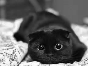 black and white female cat names pictures to pin on pinterest pinsdaddy