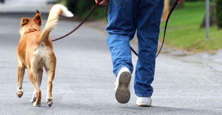 Pelatih Anjing 3 metode pelatihan basic agar anjing patuh okdogi