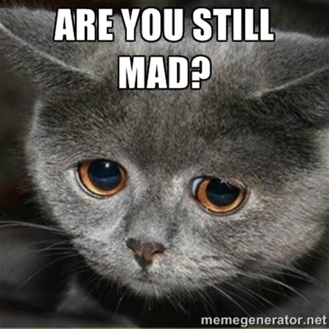 Mad Cat Meme - you still mad cat www pixshark com images galleries