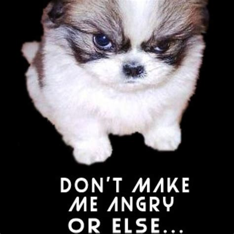 scary puppies image gallery scary puppy