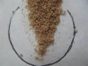dust mites vs bed bugs kill dust mite