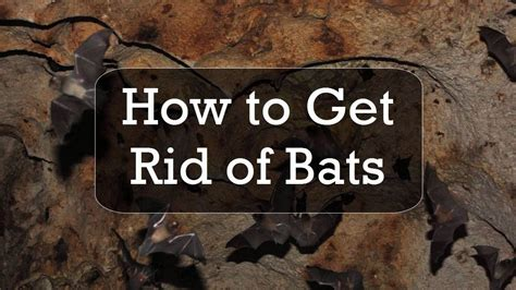 how do you get rid of bats in your backyard how to get rid of bats youtube