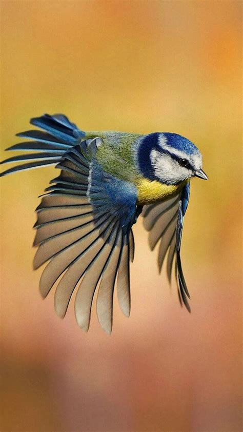 3445 best bird watch images on pinterest beautiful birds