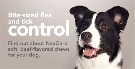 nexgard deaths fleas ticks worms vet ipswich caring for local pets booval vet hospital