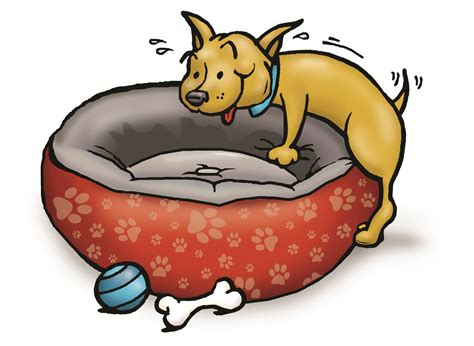 why do dogs hump their bed the truth about humping houston pettalk