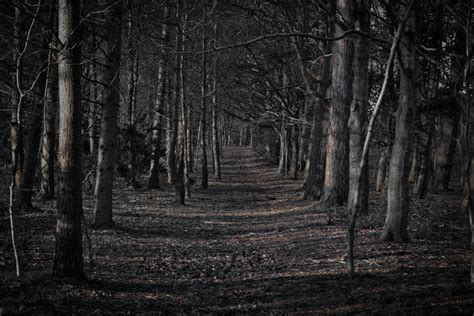 creepy background creepy forest wallpaper 66 images