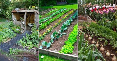 herb and vegetable garden ideas 15 herb vegetable garden ideas yard surfer