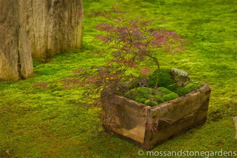 Moss And Gardens by Moss Dish Gardens Moss And Gardens