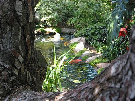 koi pond meditation gardens self realization fellowship