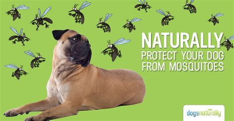 do mosquitoes bite dogs mosquito repellents dogs naturally magazine