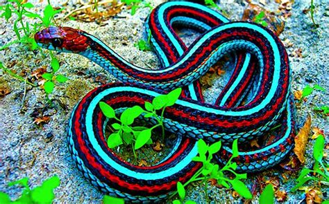 snake colors colorful snakes olive s animals
