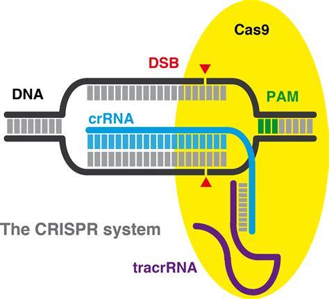 crispr cas the crispr web page