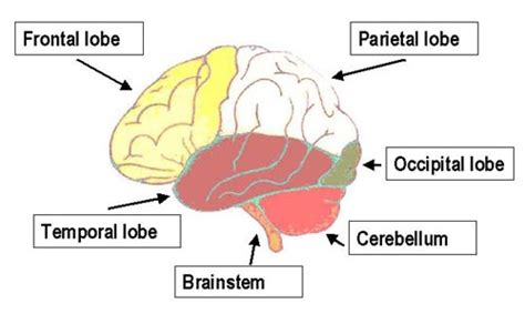 mal di testa frontale bambini testa e cervello virtua salute