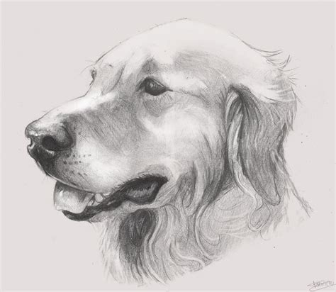 drawing of a puppy drawing by fabriciomarvin on deviantart