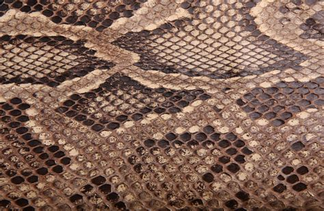 pattern photoshop snake 3 types of snakes you can have as pets for beginner owners