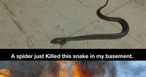 the in my basement a spider just killed this snake in my basement weknowmemes
