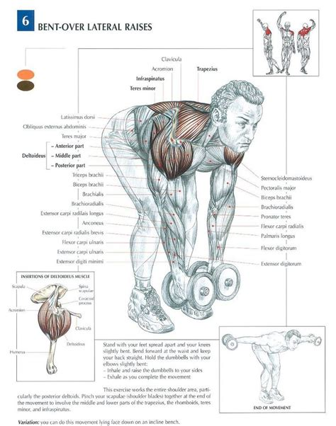 159 best exercise physiology images on health physical therapy and therapy