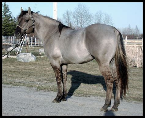 silver stallion mustang ok view topic cwhr chicken smoothie