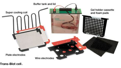 western blot cassette types of western blotting equipment cells power