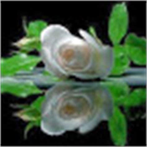 florian david fitz casado amanecer amanecer 161 161 161 que sab 233 is de