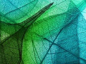 vm leaves art green blue pattern papersco