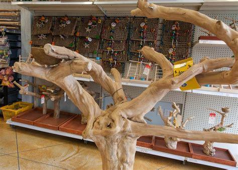 west coast tropical bird studio inc vancouver business story