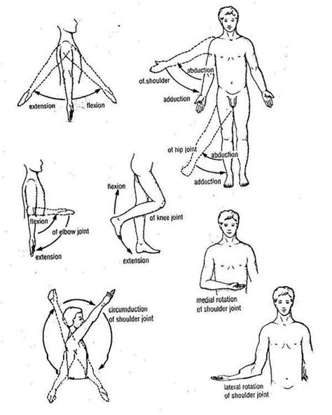 kinesiology diagram movements of limbs kinesiology anatomy