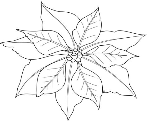 Poinsettia Coloring Page Free Printable Poinsettia Coloring Pages For Kids